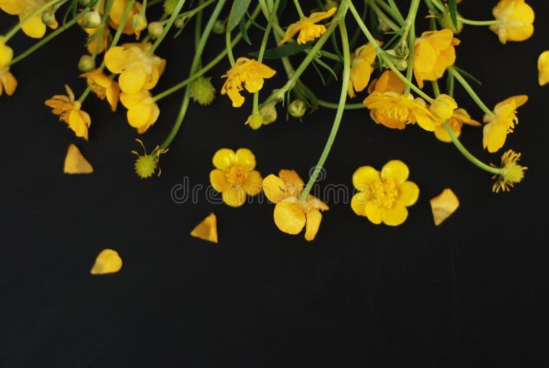 Żółtych Małych kwiatów tła mieszkania Lay kopii przestrzeni Czarna wiosna Isoalted obraz stock