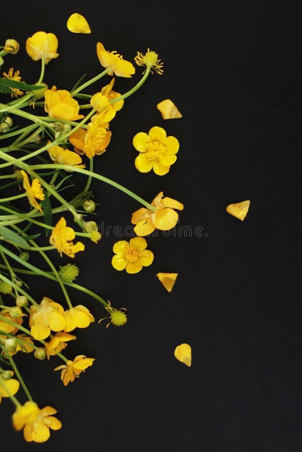 Żółtych Małych kwiatów tła mieszkania Lay kopii przestrzeni Czarna wiosna Isoalted zdjęcia stock