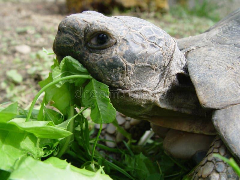 Download żółw zdjęcie stock. Obraz złożonej z obrazek, grafika, tortoise - 25410