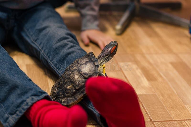 Żółw na podłodze w domu zdjęcie royalty free