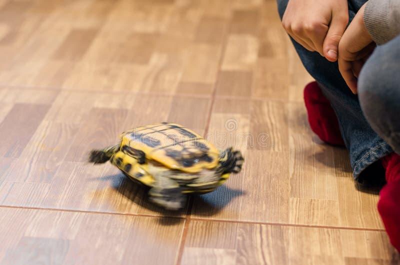 Żółw na podłodze w domu obrazy royalty free