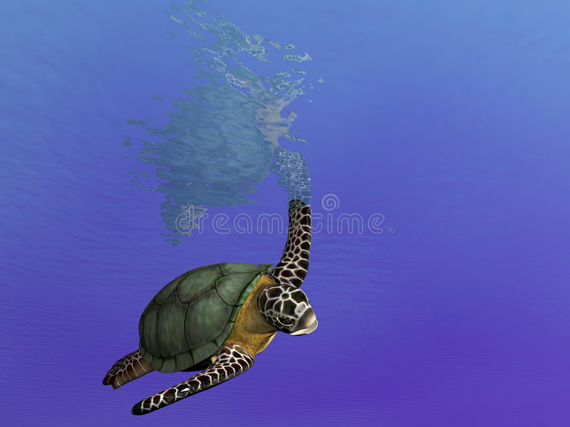 żółw pływania ilustracja wektor