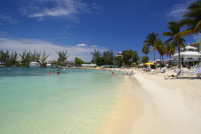 Żółw plaża, Jamajka zdjęcie royalty free