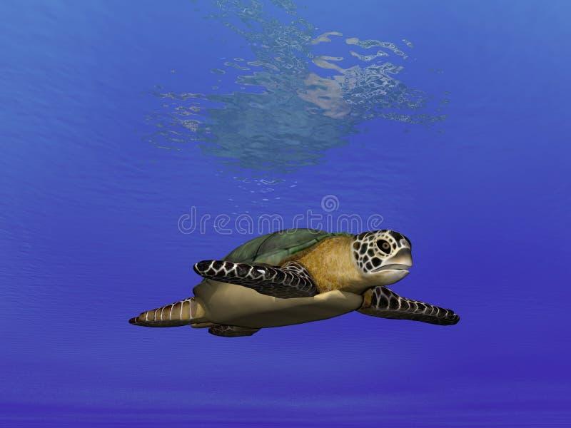 żółw podmorski ilustracji