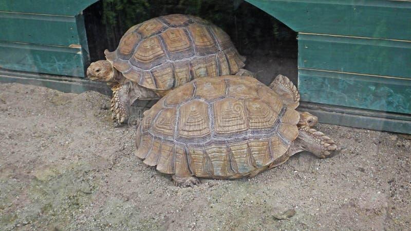 Żółwie w zoo w Irlandia obraz stock