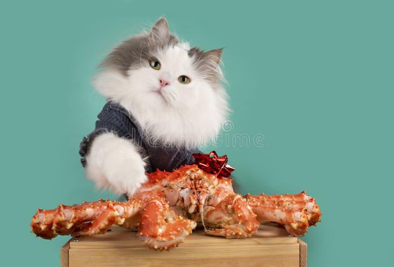 Żądny kot no chce dzielić kraba zdjęcia royalty free