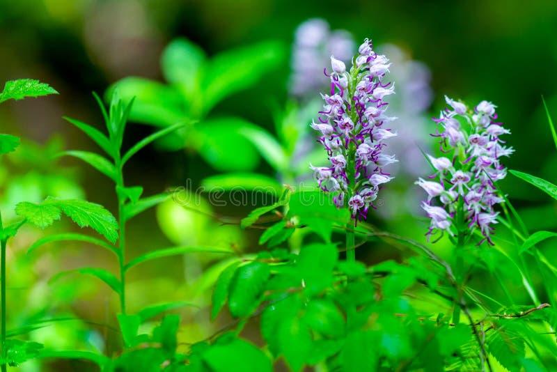 Żałość kwiat na zielonym natury tle obraz stock