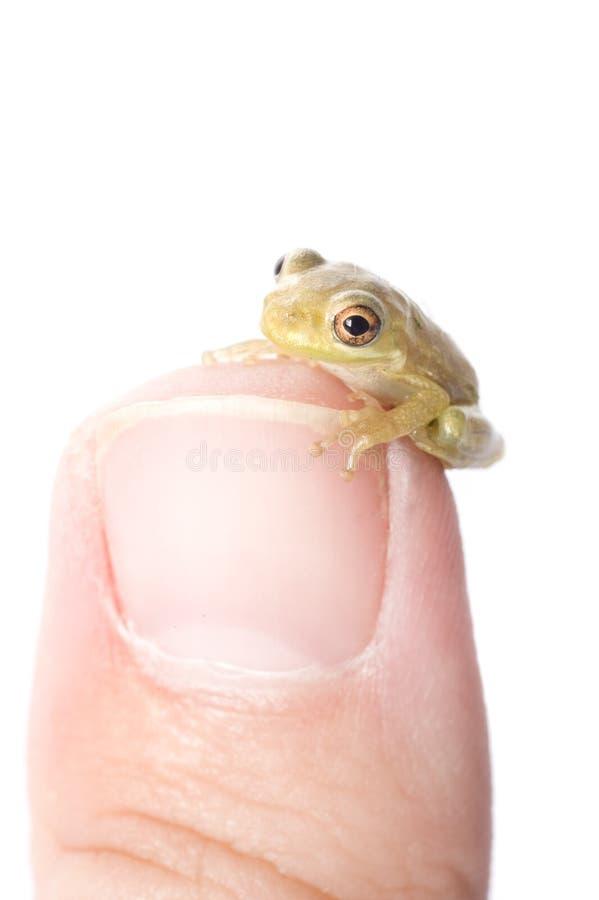 żaba kciuk zdjęcia stock