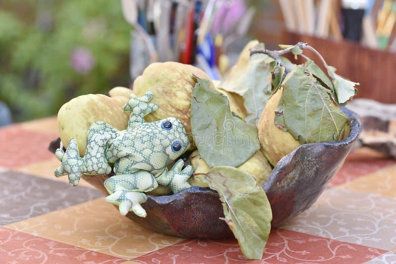 Żaba na apetycznej pigwie zdjęcia stock