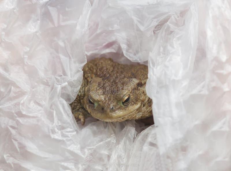 Żaba w plastikowym worku Natury zanieczyszczenia pojęcie obrazy royalty free