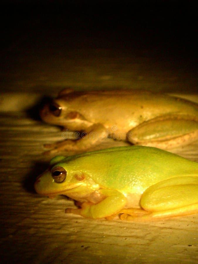 żaby bliźniacze obraz stock