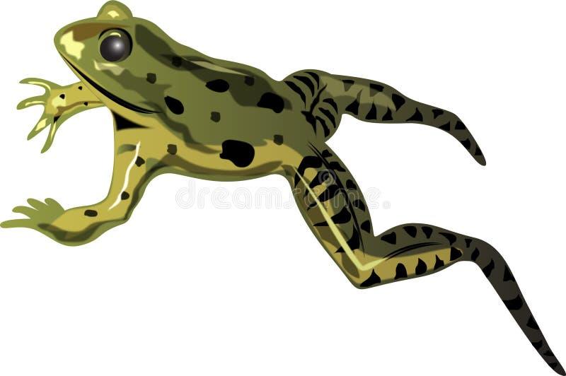 żaby skakaniu royalty ilustracja