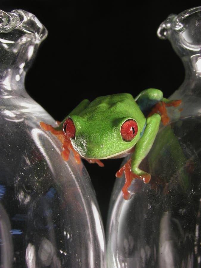 żaby szkła obraz stock