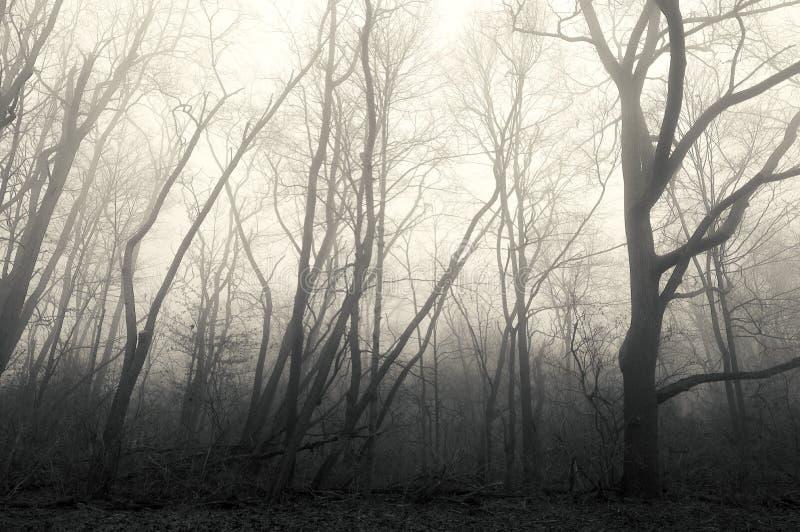 Żadny Obsługuje ziemia las w mgle zdjęcie royalty free