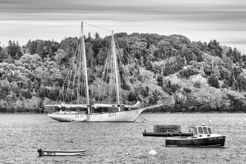 Żagiel łódź w Maine schronieniu zdjęcia stock