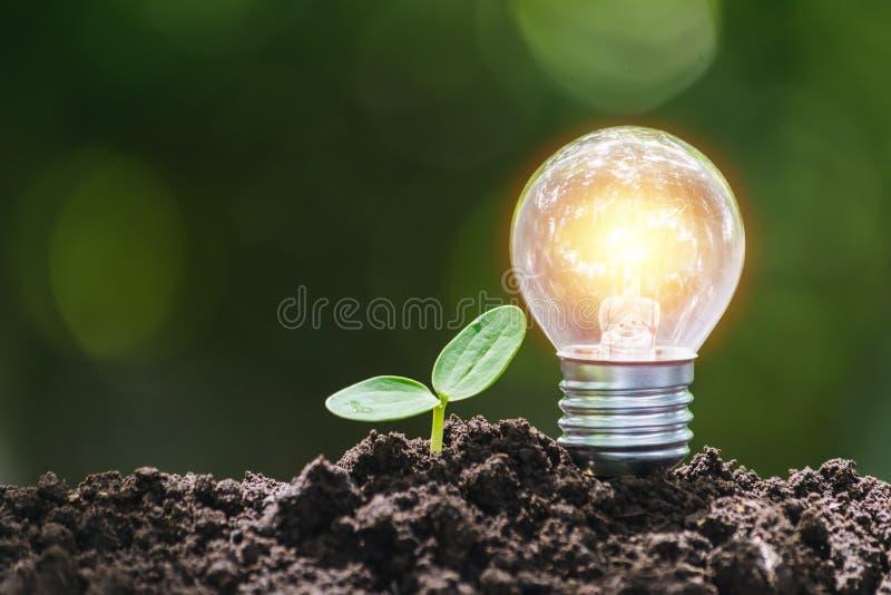 Żarówka z młodą rośliną dla ratować pieniądze, pieniężnego, biznesowego lub energetycznego pojęcie stawiającego na ziemi w miękki fotografia stock