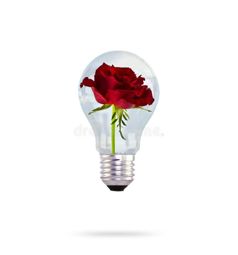 Żarówka z róża pięknym kwiatem. obraz stock