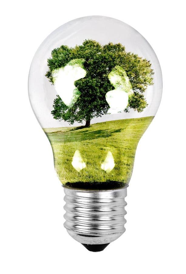 żarówki światła drzewo obraz stock