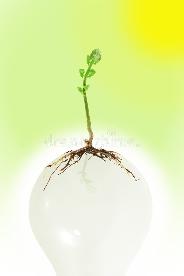 żarówki dorośnięcia światła rośliny potomstwa obraz royalty free