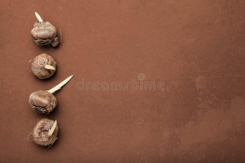 Żarówki kwiaty na brązu tle, opróżniają przestrzeń dla teksta obrazy stock