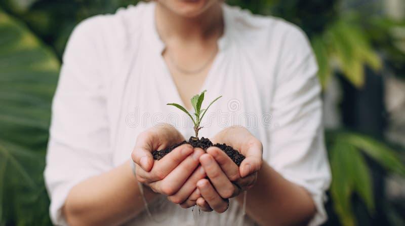 Żeńska ogrodniczka wręcza mienie rozsady zdjęcie stock