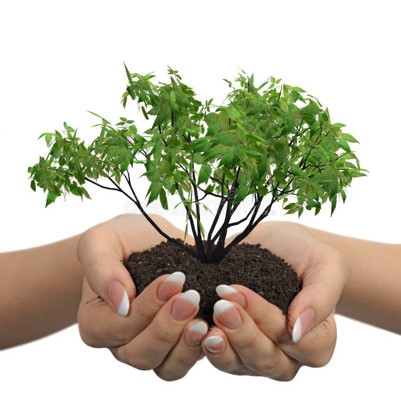 żeńska ręk rośliny ziemia obraz royalty free