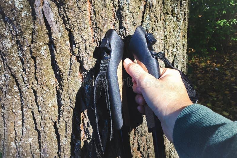Żeńska ręka bierze Północnych chodzących słupy trwanie w górę drzewa przeciw fotografia stock