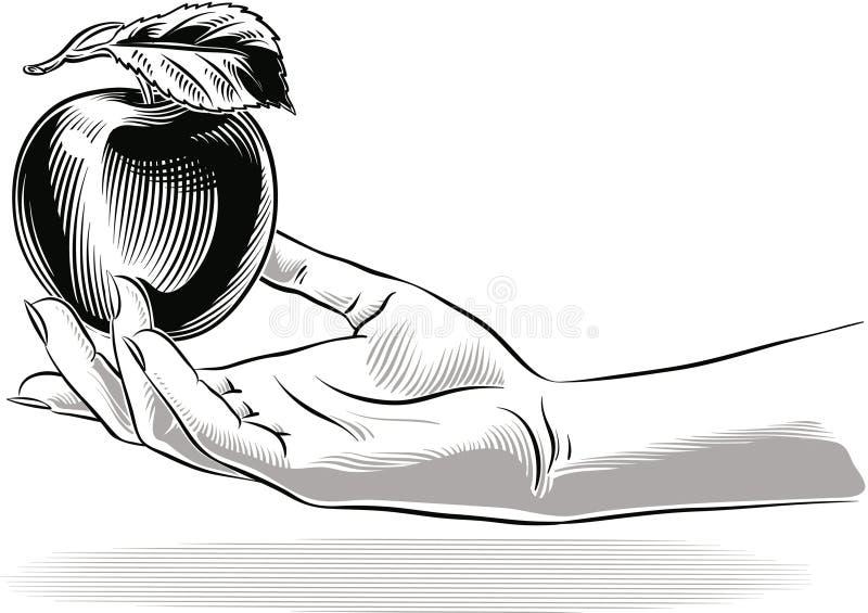 Żeńska ręka Oferuje Apple ilustracji