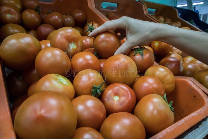 ?e?ska r?ka osi?ga szczyt pomidory w supermarkecie obrazy royalty free