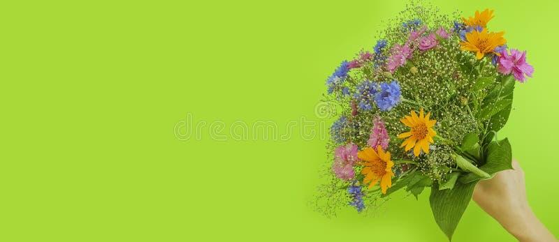 Żeńska ręka trzyma bukiet lato kwitnie na barwionym tle obraz stock