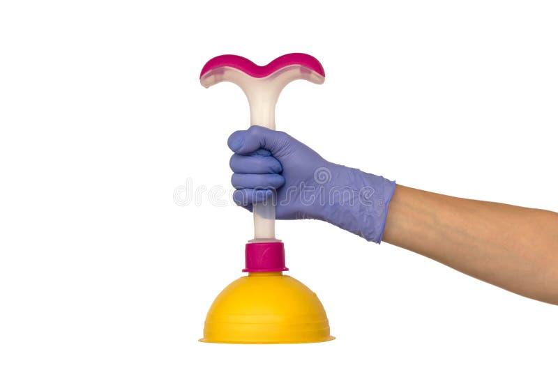 Żeńska ręka w purpurowej gumowej rękawiczce trzyma żółtego nurka z obraz stock