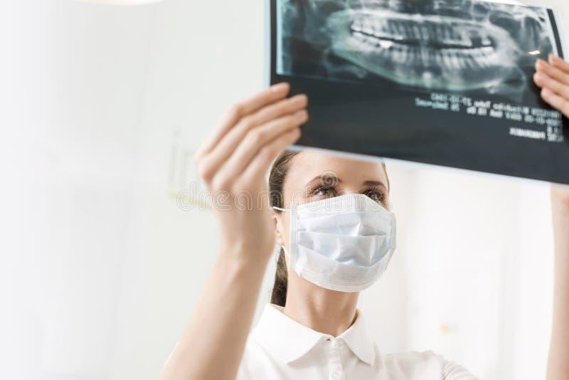 Żeński dentysta jest ubranym maskę podczas gdy egzamininujący promieniowanie rentgenowskie przy stomatologiczną kliniką obraz royalty free