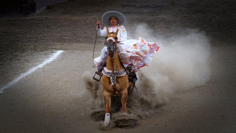 Żeński jeździec zatrzymuje jej konia nagle fotografia royalty free
