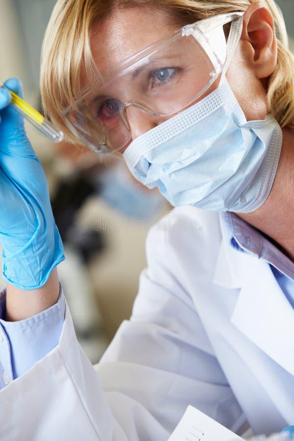 Żeński naukowiec Studiuje Próbnej tubki W laboratorium obraz stock