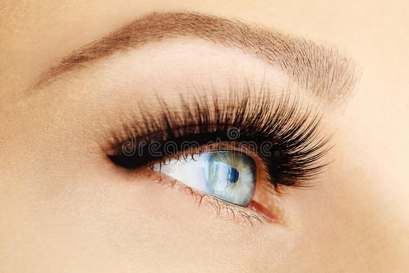 Żeński oko z ekstremum długimi sztucznymi rzęsami i czarnym liniowem Rzęs rozszerzenia, makijaż, kosmetyki, piękno fotografia stock