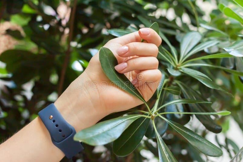Żeński ręki utrzymania zieleni liść fotografia stock