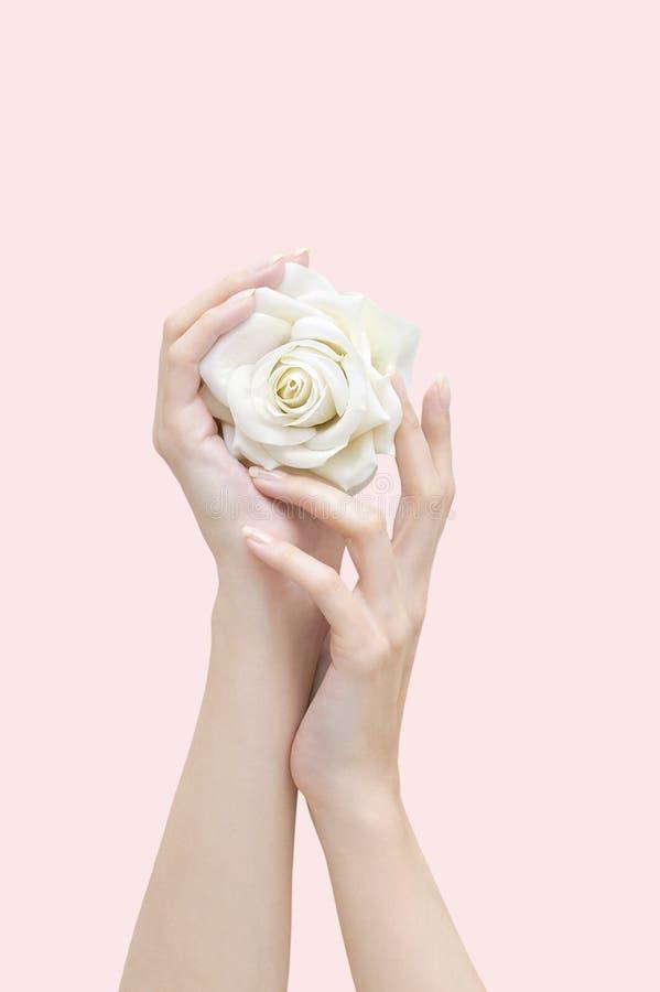 żeńskie ręki odizolowywający róży biel zdjęcie stock