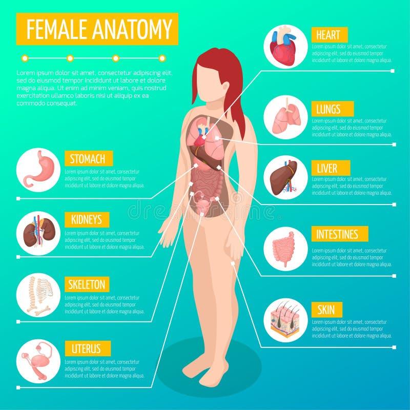 Żeńskiej anatomii Isometric plakat ilustracja wektor