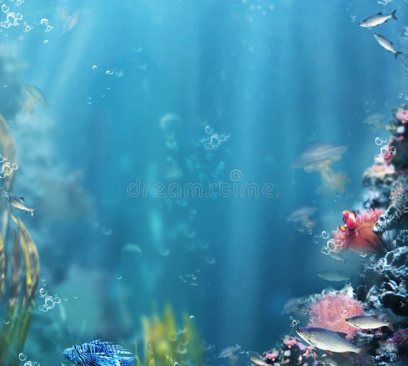 żeglarz bańka kopii ryby morskie życie ilustracyjnego wodorosty są rozmieszczone tekstu wektora Akwarium z ryba i koralami fotografia royalty free