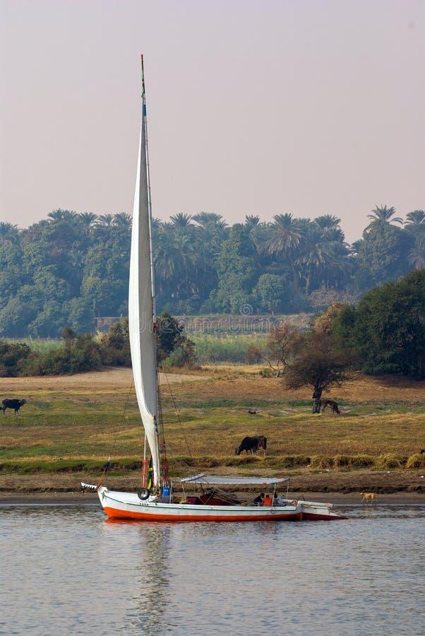 Żeglowanie łódź typowy maszt Nil rzeka w Egipt żegluje obok brzeg rzeki z bardzo zieloną roślinnością i łąką obraz stock