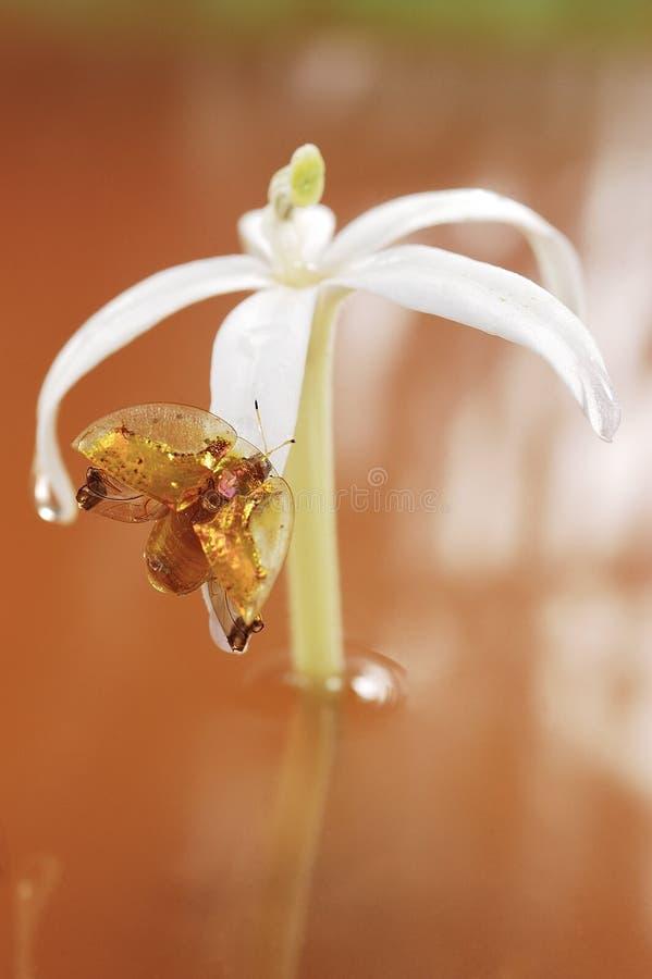 Żerdź na kwiacie zdjęcia stock