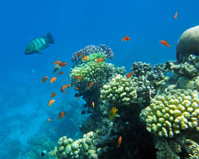 żerdzi koralowa czerwień obrazy royalty free