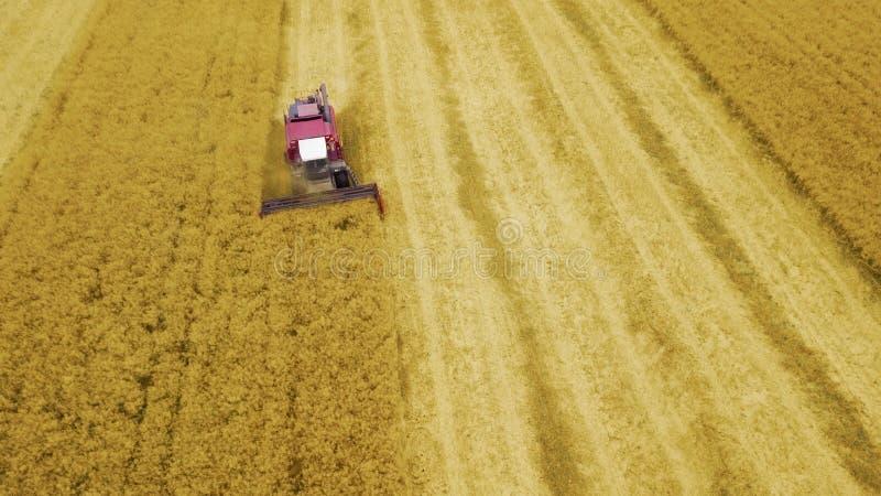 Żniwiarz przeprowadza żniwa kukurudzy w polu obraz stock
