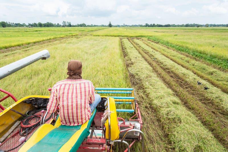 Żniwiarza rolnictwa maszyna i zbierać w ryż odpowiadamy worek fotografia royalty free