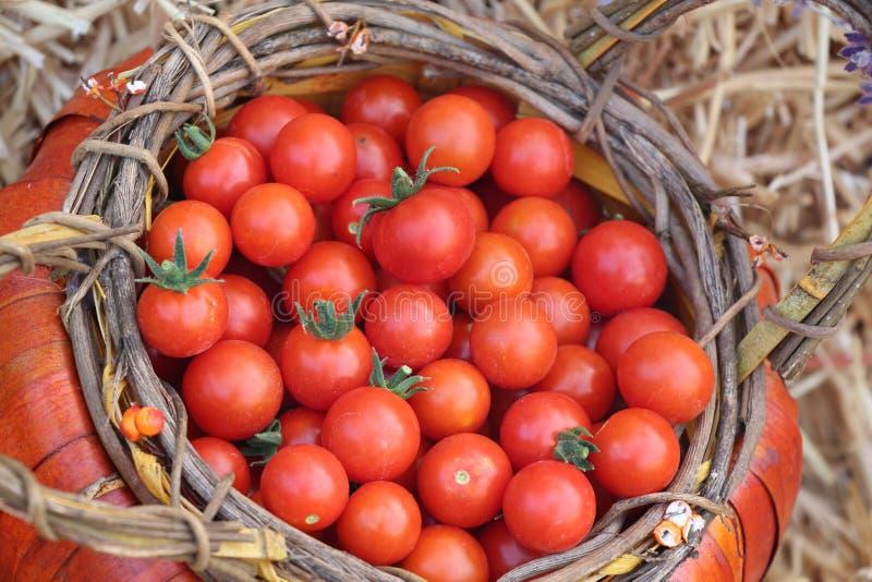Żniwo Heirloom Czereśniowi pomidory fotografia royalty free