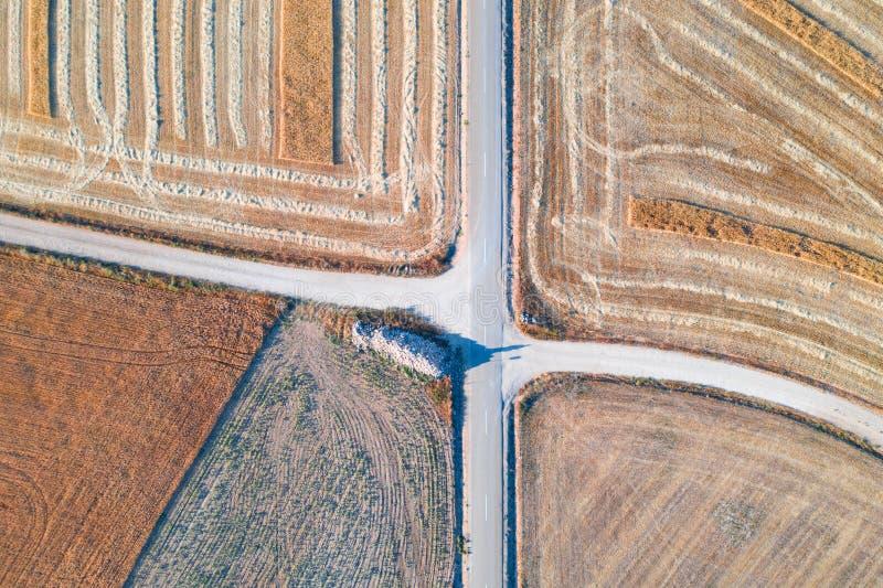 Żniwo pszeniczni pola w Sierpniowym lecie obraz royalty free
