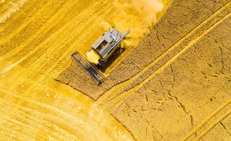 Żniwo pszeniczny pole  obrazy stock