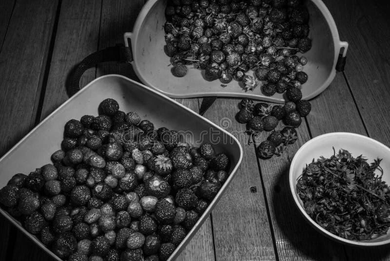Żniwo riped truskawka rozdzielenie liście czarny white fotografia royalty free