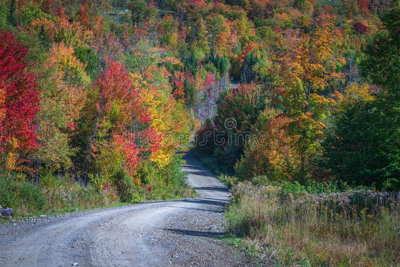 Żwirowa droga zakrzywiona i pochylona w kierunku kolorowego lasu fotografia royalty free