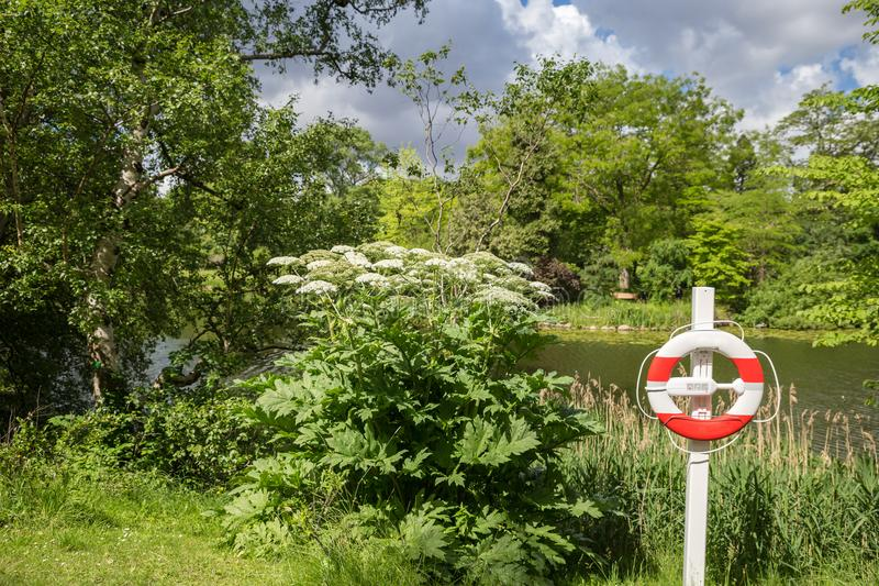 Życia boja przed jeziorem w lecie, fotografia royalty free